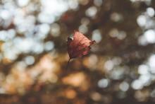 une feuille morte vole dans la nature