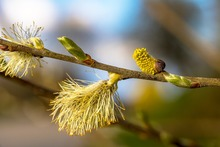 au printemps la nature bourgeonne et les allergies reviennent