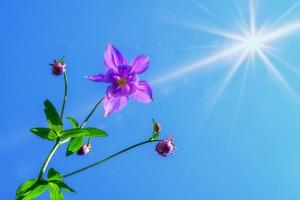 une fleur rose en vie grâce au soleil