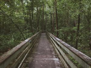 un chemin pour se promener à pieds en forêt