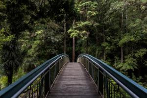 pont qui mène à la forêt pour une nouvelle vie hors du nid