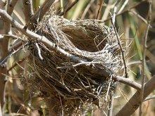 nid vide sur une branche