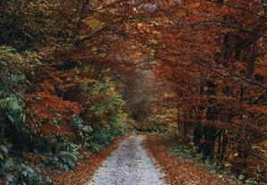 La ménopause sur le chemin de l'automne de la vie